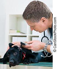 vétérinaire, docteur
