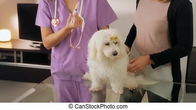 vétérinaire, donner, chien, drogue, propriétaire, médecine