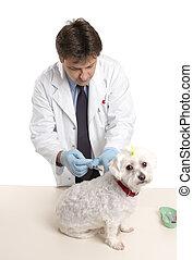 vétérinaire, donner, chien, injectable, médicament