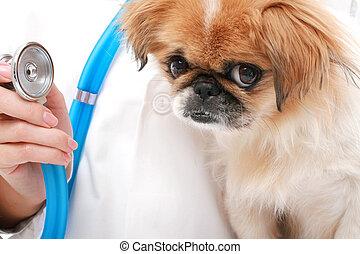 vétérinaire, et, petit, dog.