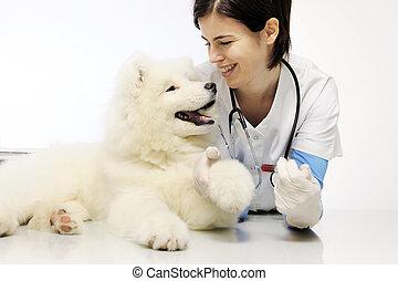 vétérinaire, examen, chien, vétérinaire, sanguine, clinique, sourire