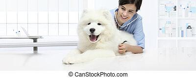 vétérinaire, examen, vétérinaire, chien, clinique, stéthoscope, écoute, table, vétérinaire, sourire