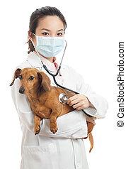 vétérinaire, femelle asiatique