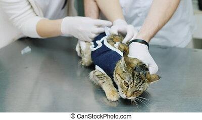 vétérinaire, injection, marques, chat