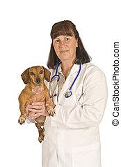 vétérinaire, patient, femme