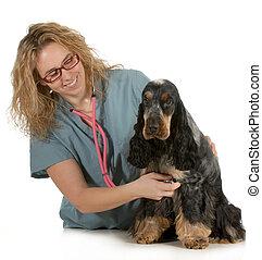 vétérinaire, soin