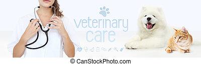 vétérinaire, symboles, concept., stéthoscope, soin, isolé, chat, fond blanc, chien, mains, graphique