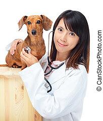 vétérinaire, teckel, femme, chien