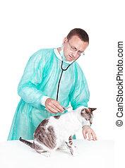 vétérinaire, vétérinaire, isolé, chat, arrière-plan., clinique, diagnosed, blanc, stethoscope.