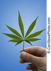 vício, marijuana