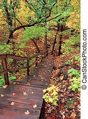 vívido, otoño, paisaje