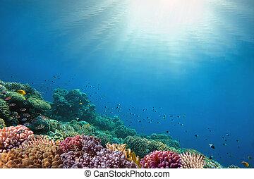 víz alatti, elvont, háttér