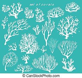 víz alatti, korall, állhatatos, zátony, alapismeretek