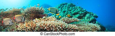 víz alatti, panoráma