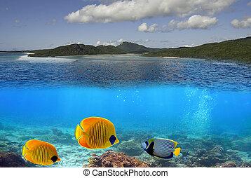víz alatti, queensland, ausztrália, whitehaven, whitsundays...