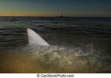 víz, cápa, óceán kajak, felül, uszony