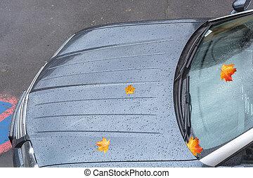 víz, cseppecskék, bonnet., autó