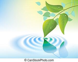 víz csobog, és, levél növényen