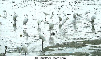 víz, kócsagtollak, amikor, alacsony, állatok, tide1, talál,...