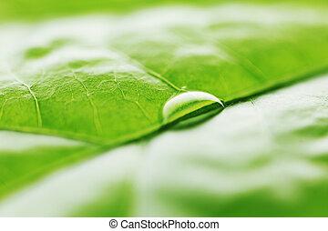 víz letesz, képben látható, zöld lap