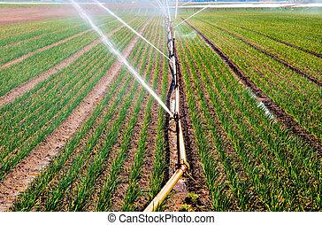 víz spré, alatt, mezőgazdaság