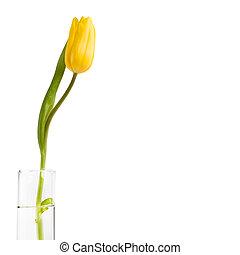 víz, tulipán, pohár