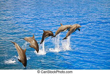 víz, ugrás, ki, delfinek