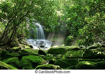 vízesés, erdő, eső