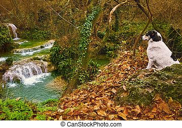 vízesés, kutya
