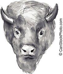 vízfestmény, american bison, fej