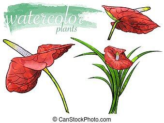 vízfestmény, virág, állhatatos, piros