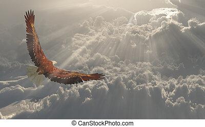 vôo, águia, aproximadamente, nuvens