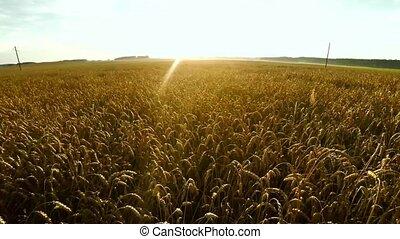 vôo, sobre, crops., grande, trigo, field.