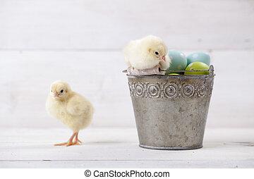vödör, ikra, húsvét, azt, csibék