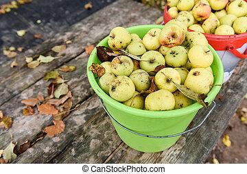 vödör, kert, alma