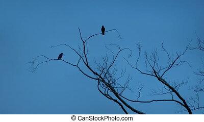 vögel, fliegen, aus, zweige