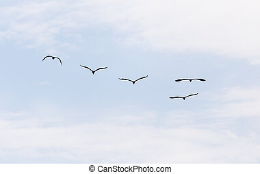 vögel, in, der, himmelsgewölbe