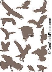 vögel, raubtier