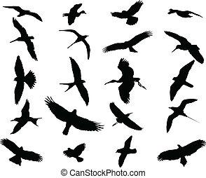 vögel, sammlung