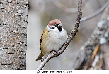 vögel, von, der, steppes