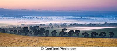 völgy, köd
