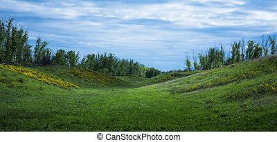 völgy, zöld