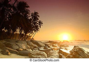 východ slunce, dále, sri lanka