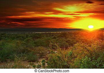 východ slunce, do, afričan, savana