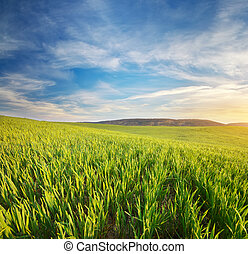 východ slunce, do, grean, meadow.