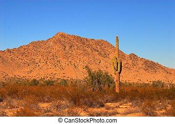 východ slunce, saguaro
