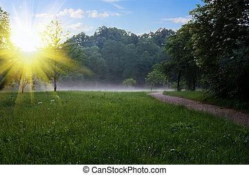 východ slunce, v, ta, léto, sad