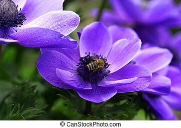 včela, dále, květiny