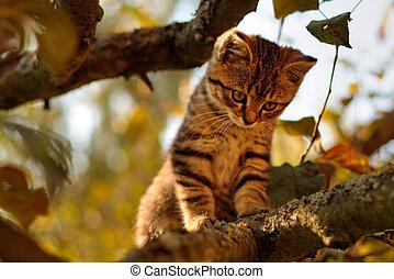 větvit, výstup, mourek, strom, kotě, šikovný