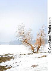 V SHAPED SINGLE TREE